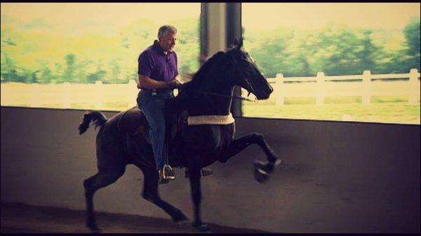 Les Tenessee Walking Horses