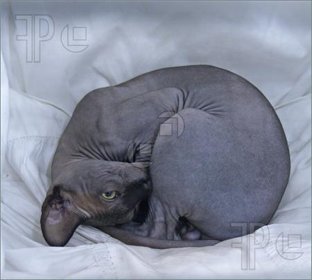Si j'étais un chat, je serais: