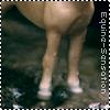 Equine-Sensation