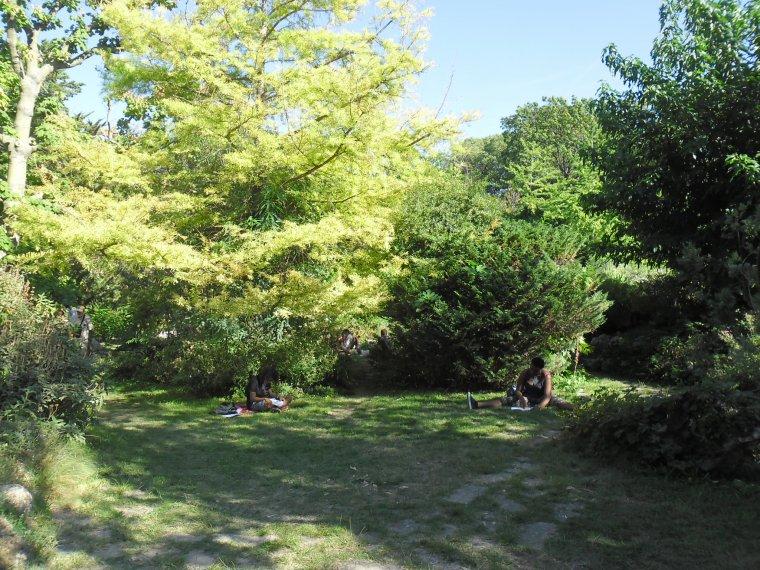 LE JARDIN DE PLANTES A MONTPELLIER