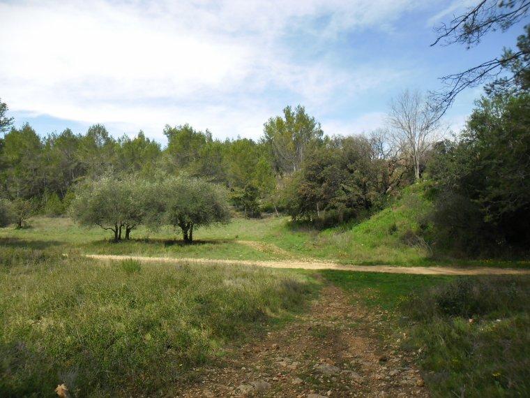 COLLINE DE CLAPIERS (à quelques kilomètres  de Montpellier)