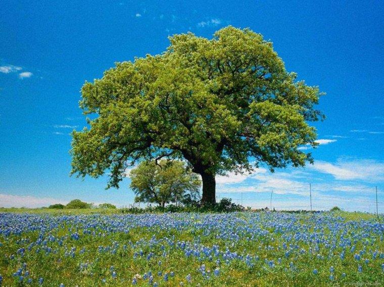 Sa majesté, l'arbre !