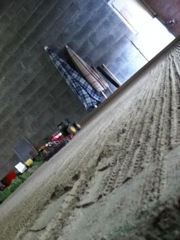 Dio semi de colza 2012