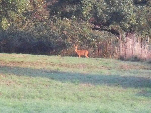petite surprise au matin dans mon terrain