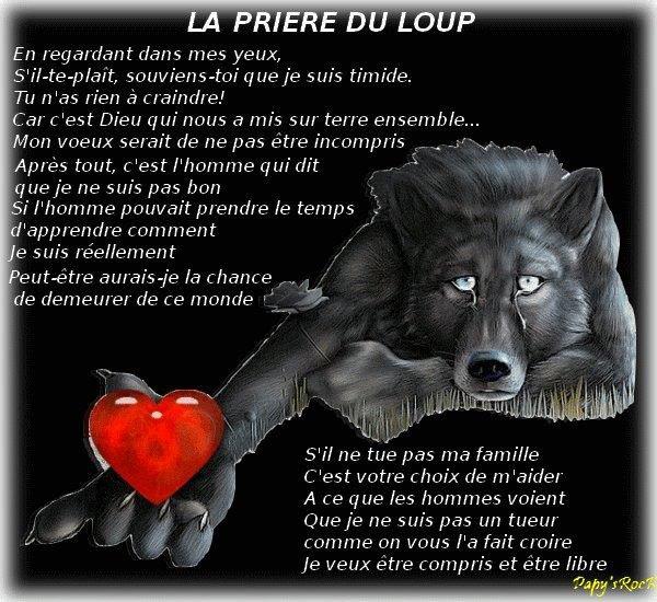 moi j'aime les loups....
