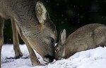 bambi et panpan..