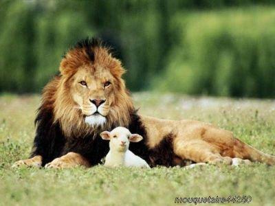 lion et agneau,tout est possible...