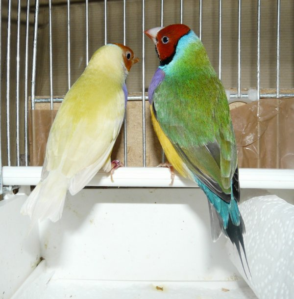 Diamand de Gould 2012 (1er couple)