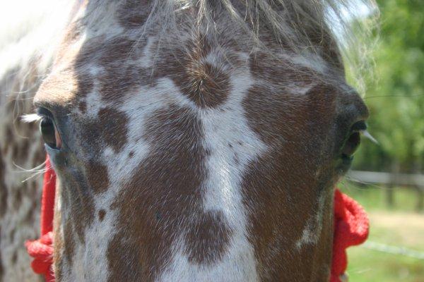 « Le respect du cheval c'est la fondation de la liberté »