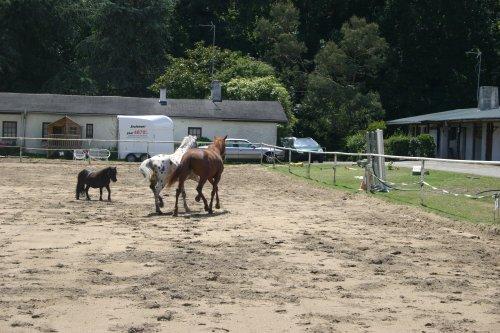 On ne choisit pas un cheval. C'est le cheval qui nous choisit .