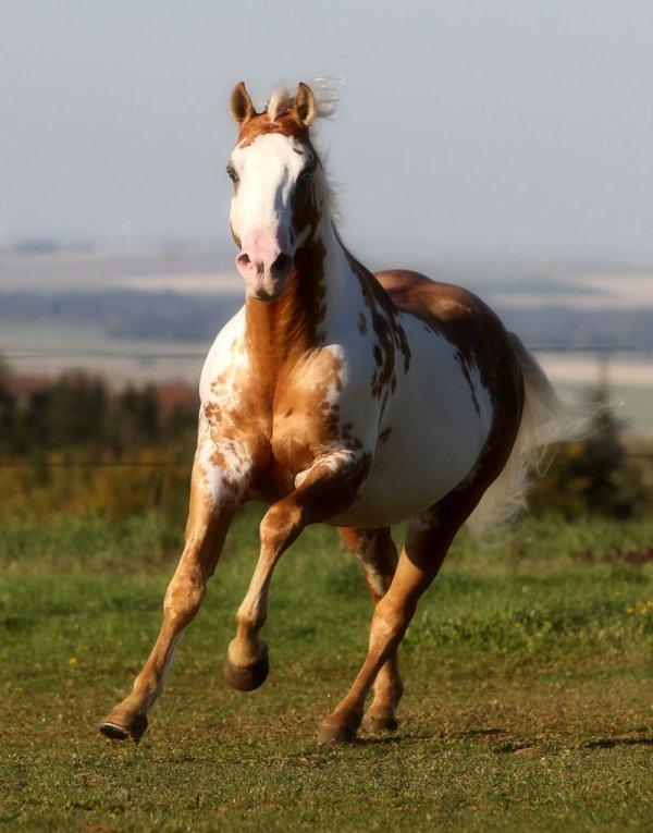 """""""Un cheval qui court , c'est l'image de la liberté ."""""""