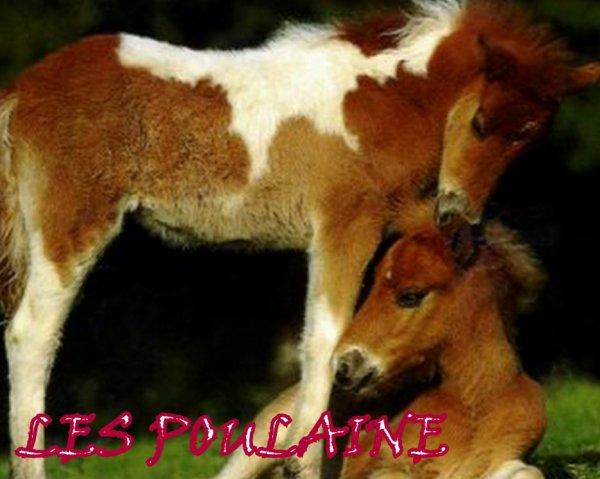 - Blog de lotacassis -