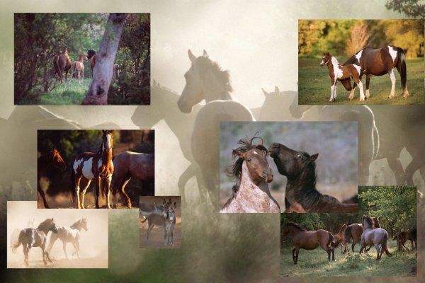 - Wild horses -