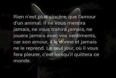 l'amour d'un animal
