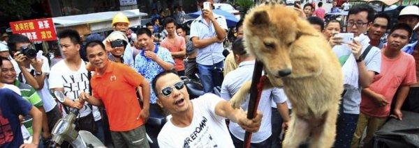 Non au Festival de YULIN ! Non à la consommation de chiens et de chats !