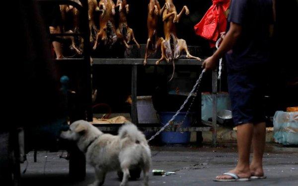 Coronavirus en Chine : la consommation chien et chat interdite