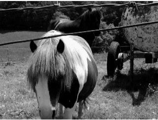 Te regarder et savoir que je ne peux pas te toucher, c'est ça qui fait le plus mal .  Mon poney Merveilleux ....