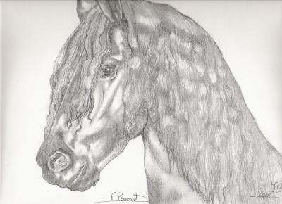 Frison et frisson passion des chevaux et du dessin - Frison saut d obstacle ...