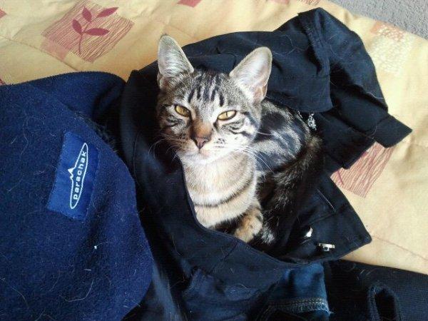 Ma petite Catsy !