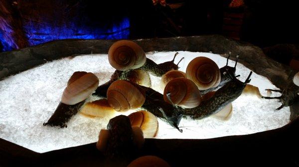les escargots de Léon