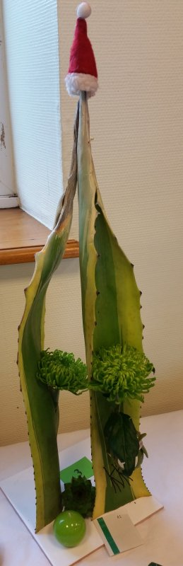 feuile  d'agave