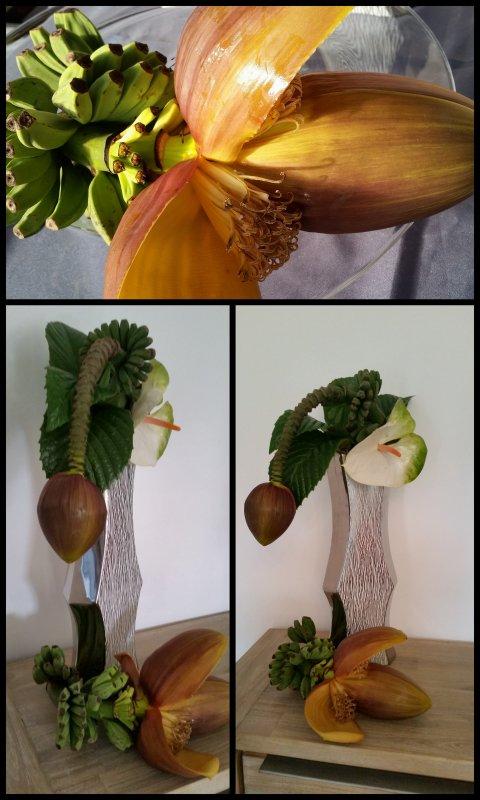 Bananes du  Finistère  !!