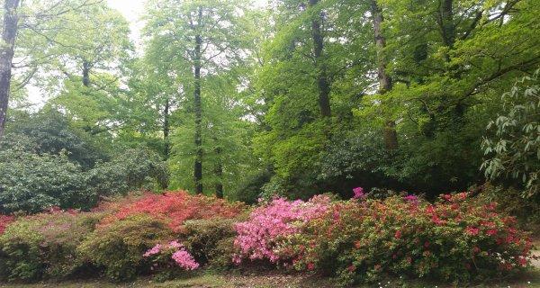 Festival du Rhododendron à Trévarez