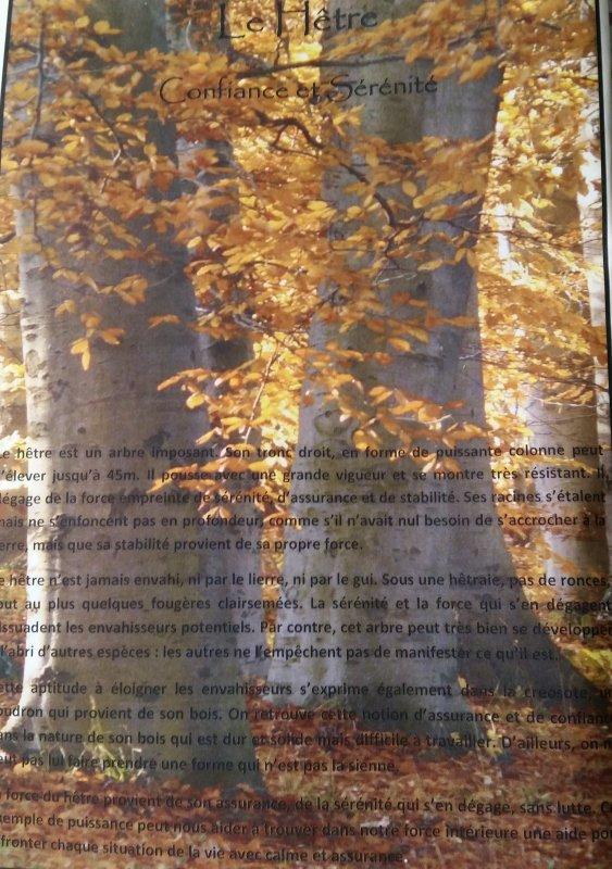 Bienvenue dans la foret .... le hêtre, le frêne et le chêne ....