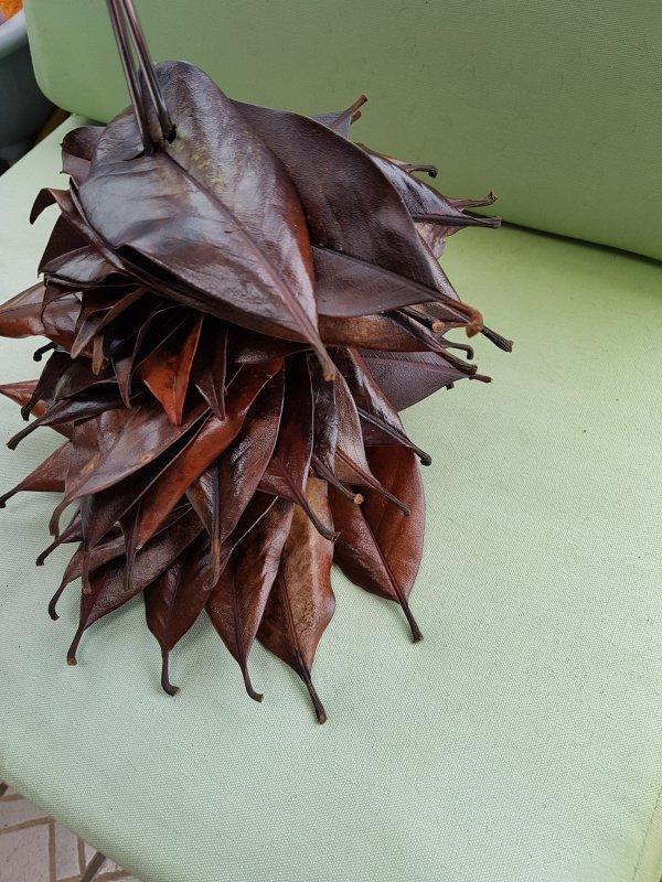 1 -  Sapin en feuilles de magnolia et physalis