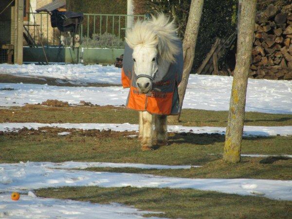 L'hiver est arrivée, gros poney, a le droit a une nouvelle couverture.<3
