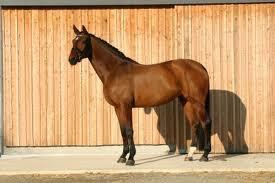 cheval connue ... n°2 (Riwera de Hus )