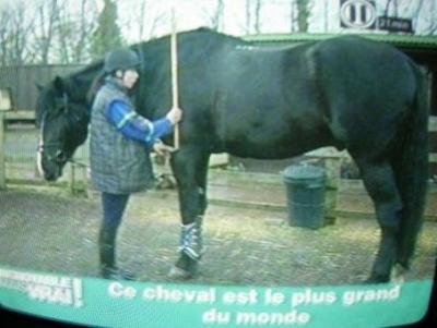 le plus grand cheval du monde pour les pasionner de chevaux. Black Bedroom Furniture Sets. Home Design Ideas