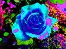 Photo de paradis-des-roses