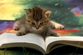 Nouveau tag lecture...