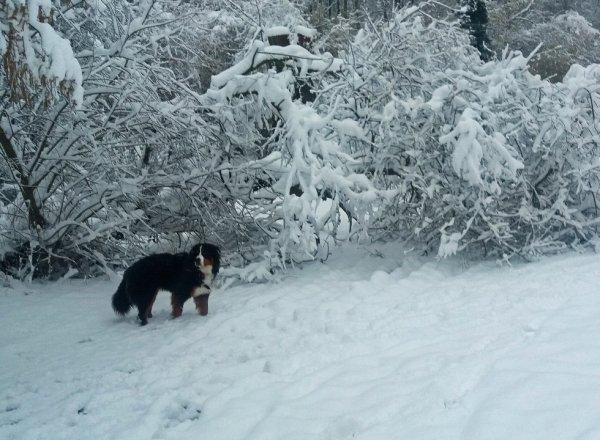 Masha 20 mois ce 7 février 2018, heureuse dans la neige , mais l'une de ses dernières photos ...
