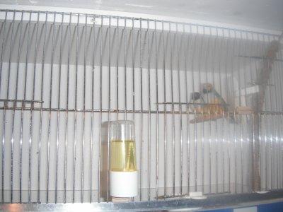 male vpbto et femelle vpbtn