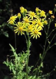 Fleurs Toxiques Pour Les Chevaux