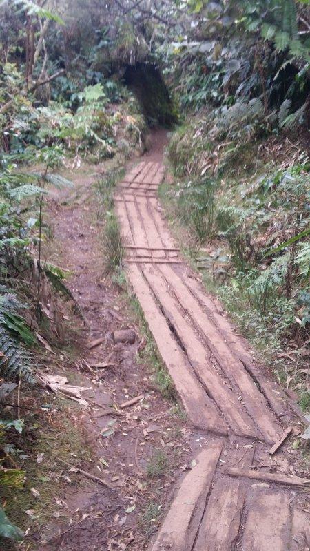 Sentier de la forêt du Brûlé