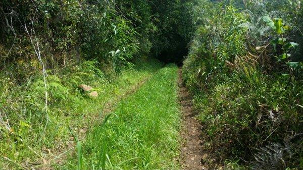Ancien chemin de la plaine d'Affouches