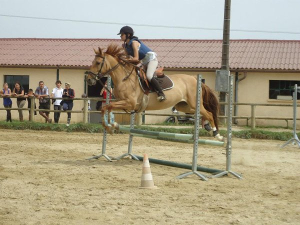 Concours de saut.