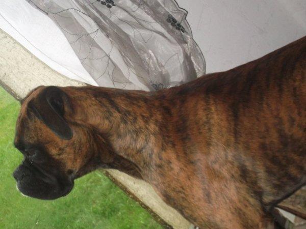 Le chien le plus merveilleux du monde & bh cst le mien :) <3