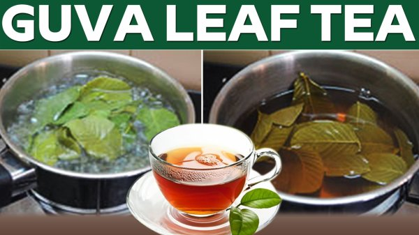 Unbelievable Hidden Health Benefits | Guava Leaves tea