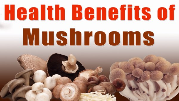 Amazing Health Benefits of Mushrooms that You Must Know