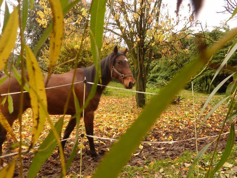 """samedi 17 novembre: """"certains oublient que l'équitation est un art, or l'art n'existe pas sans amour"""""""