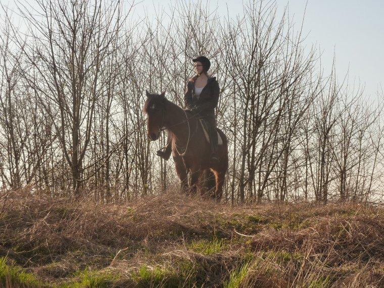 """samedi 22 mars: """"Etre aimé par un cheval ou par un autre animal doit nous remplir d'humilité et de reconnaissance, car nous ne le méritons pas.""""  L Vivier"""