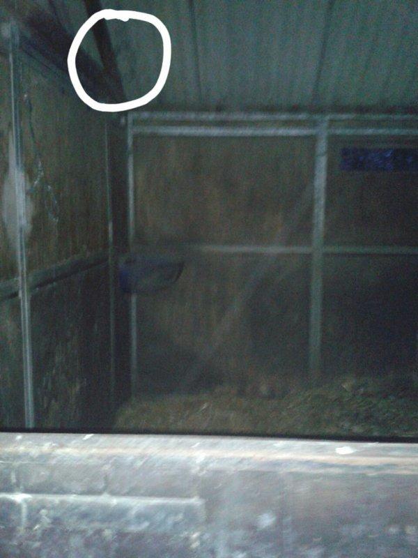 Nouvelle photo nº2 : j'ai entouré l'endroit ou on voit une tête qui ressamble à celle d'un cheval