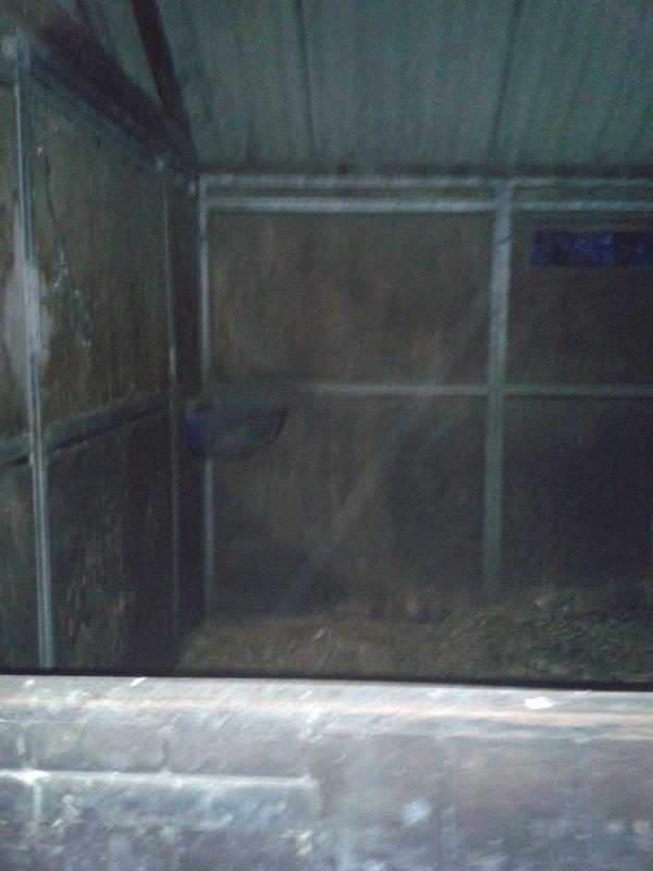 Nouvelle photo nº2 ( photo original ) il y a quelques instants j'analysais cette photo et voici ce que j'ai remarqué : en haut à côté de la poutre une entité qui à une tête qui ressamble à une tête de cheval mais avec des yeux furieux ( si vous voyez bien ) , en plus comme par hasard dans un box de cheval