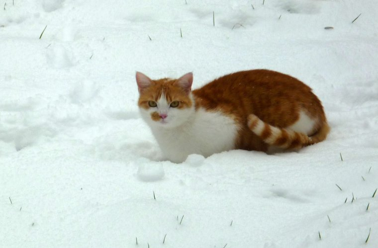 Ficelle et la neige.
