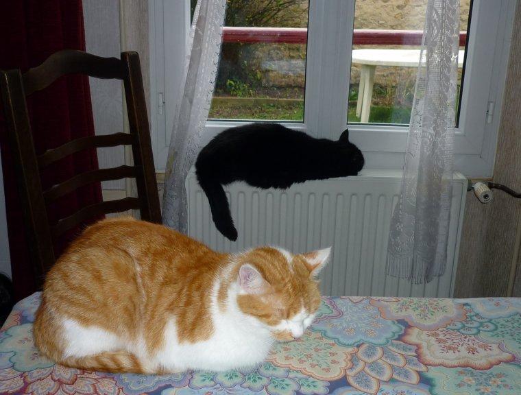 Une vie de chats !