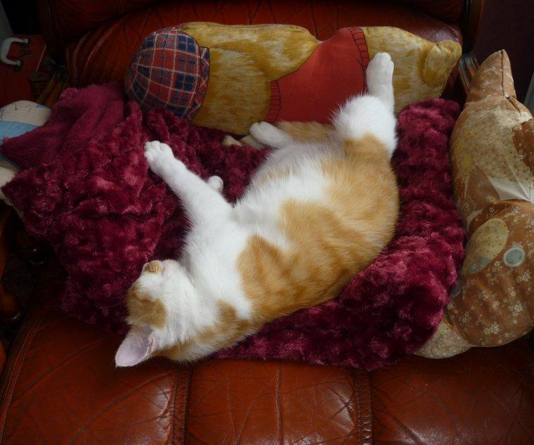 Une vie de chat !